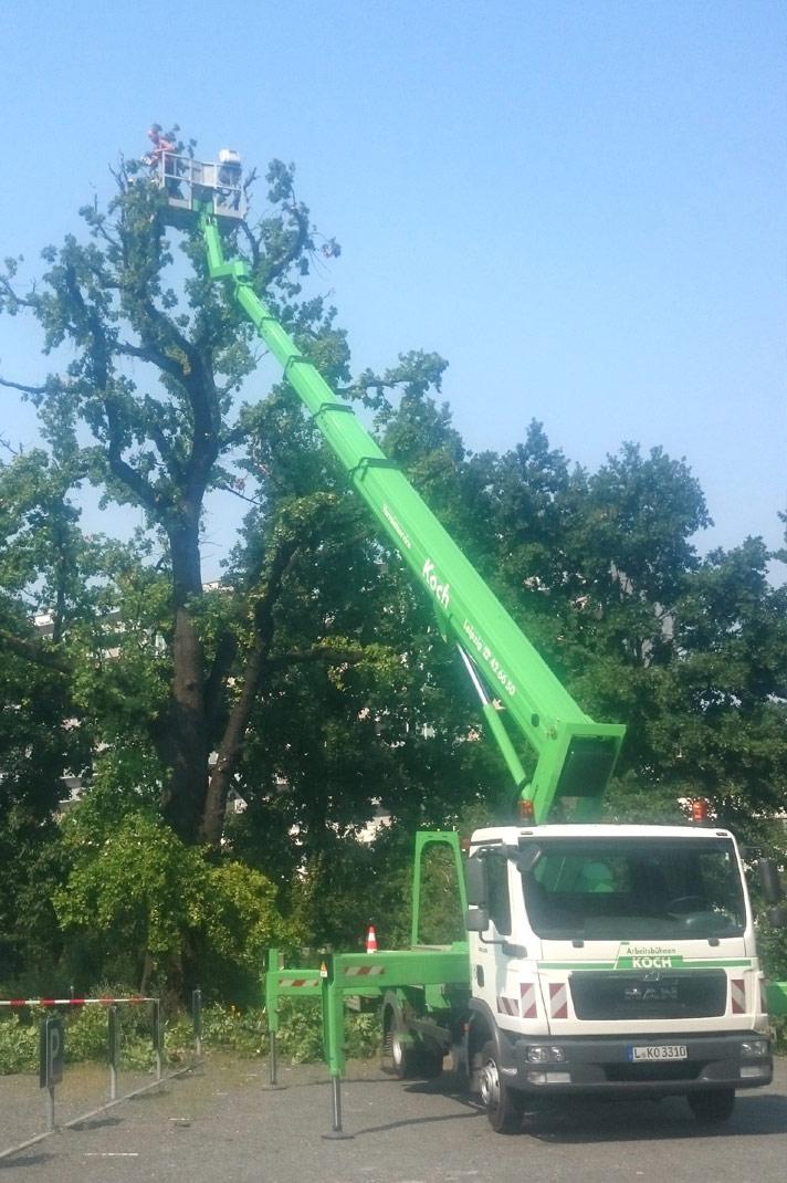 Top Grünflächenpflege :: Baumfällarbeiten :: Winterdienst #BG_37